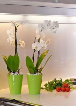 кръгла кашпа/саксия CLIVO   за орхидея с диам 12,5/15 см Н